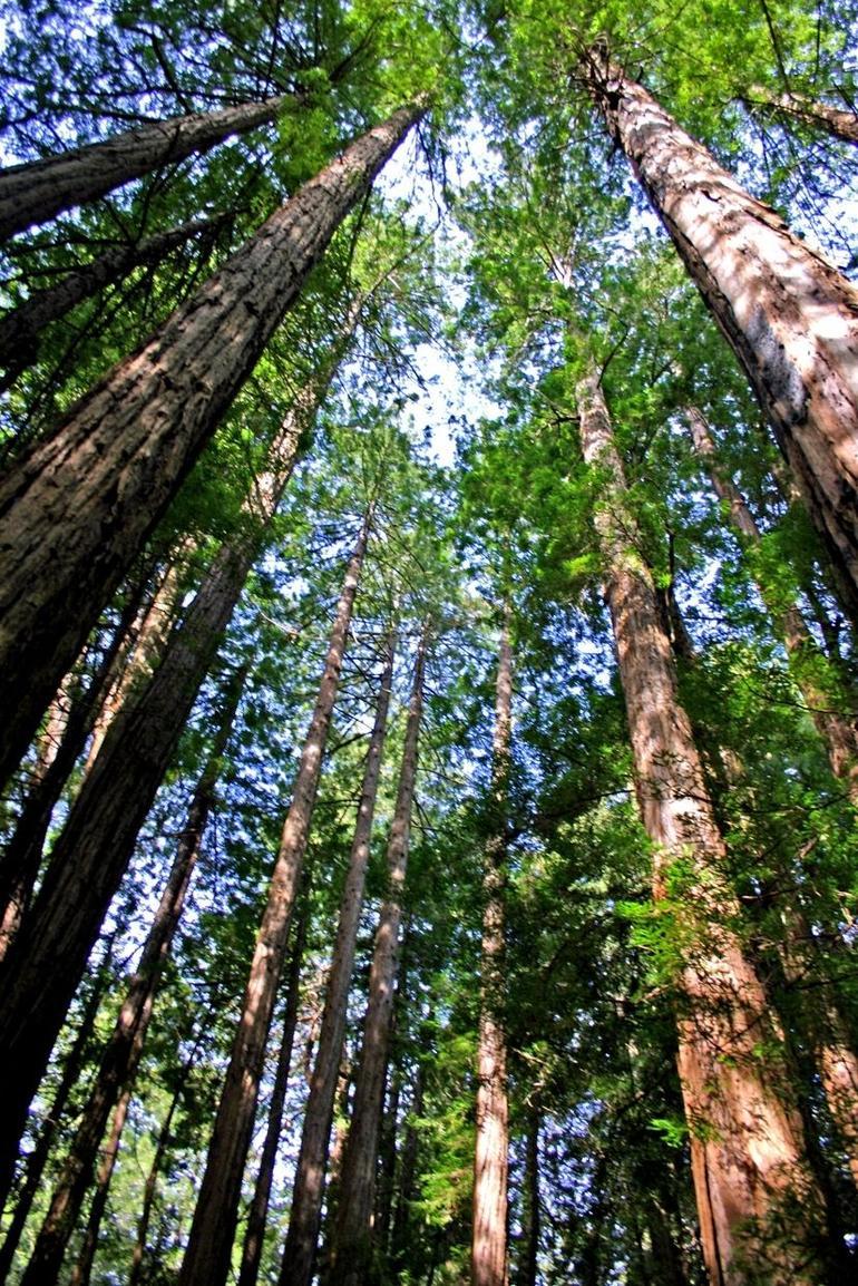 Yosemite Day Trip - San Francisco