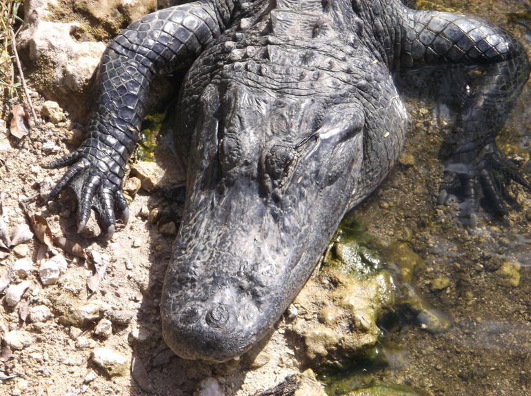 Private Tour: Everglades Adventure Day Trip from Ft Lauderdale