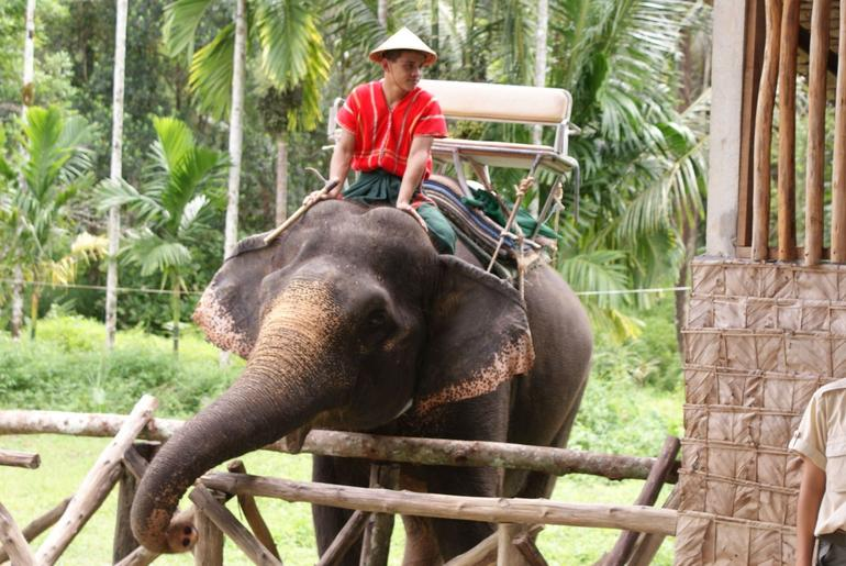 Amazing Elephant Ride -