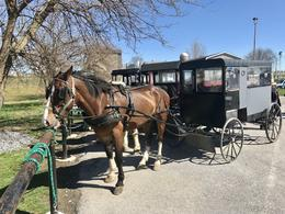 A horse and buggy similar to what we rode in , Thomas M - March 2017