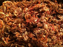 We tried these bite-size crabs while walking around Gwang-Jang market - not bad! , Jan - April 2015