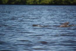 dolfijnen , Edo D - August 2015