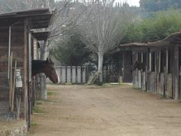 See the horsey. - December 2009