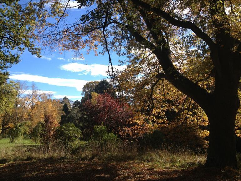 Botanic Gardens - Christchurch
