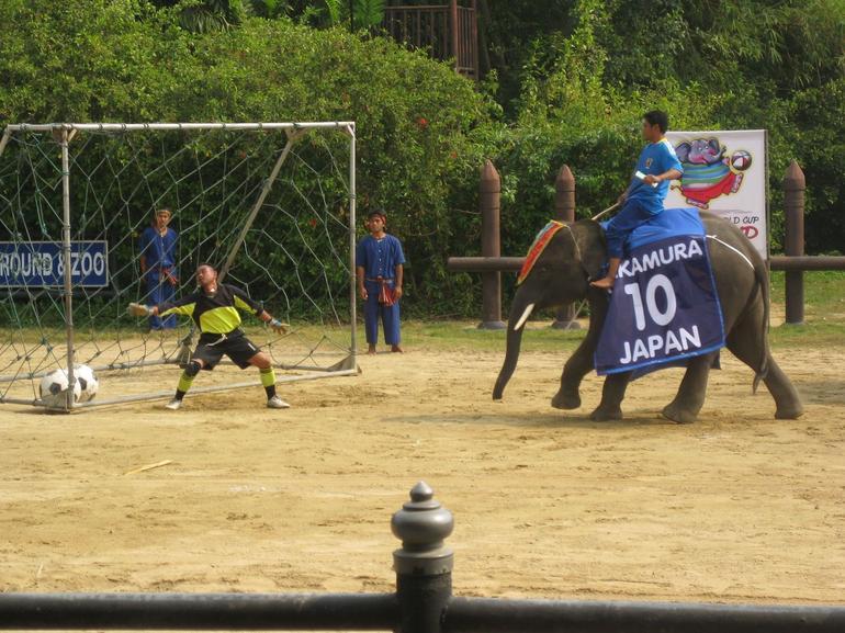 Elephant Soccer - Bangkok