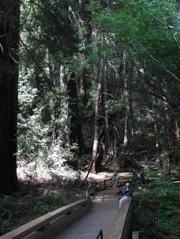 The accessible walkway through Muir Woods , Robin B - October 2013