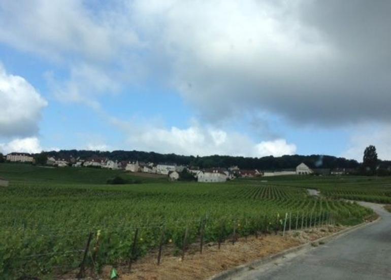 Vineyards in Hautviller region - Champagne