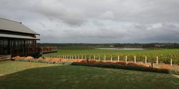 Beautiful wines and saw a kangaroo amongst the vines. , Jennifer E. S - April 2013