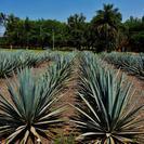 Tequila Day Experience Including Hacienda San Jose del Refugio, Guadalajara, MEXICO
