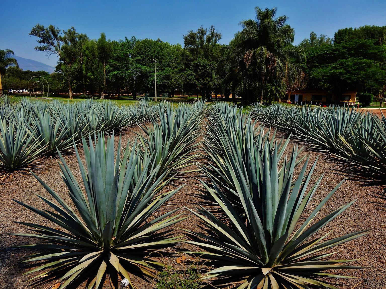 MÁS FOTOS, Tequila Day Experience Including Hacienda San Jose del Refugio