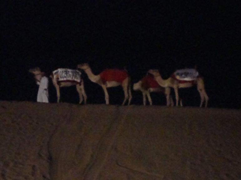 Camel say - Dubai