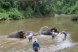 The elephants enjoyed playing in the water with the mahouts., Laurie R - September 2007