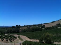 More lovely vineyards., Melissa H - August 2013