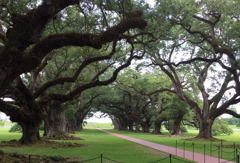 Oak Alley Plantation Tour photo 26