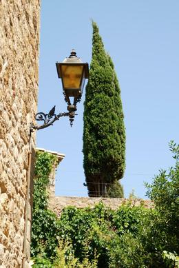 Lamp and Cypress Tree., Stuart R - August 2008