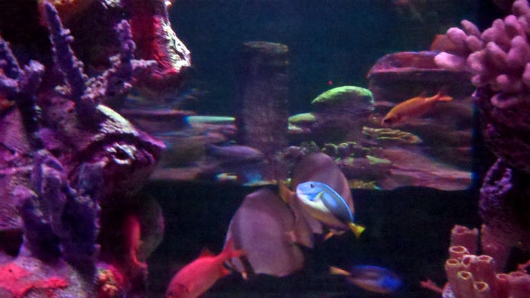 SEA LIFE Arizona*
