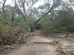 One of the many public paths near Scenic World , Peter A - September 2016
