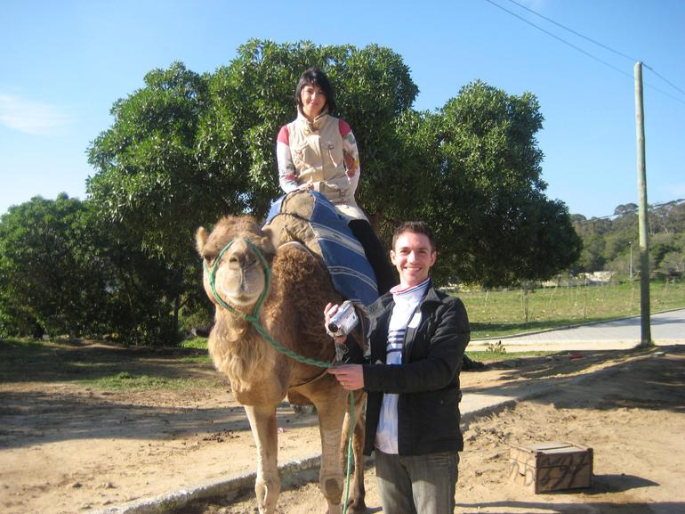 Camel ride - Costa del Sol