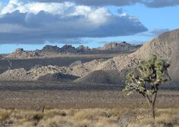 View of Joshua Tree National Park - March 2013