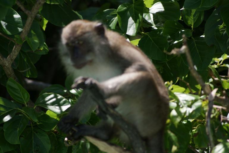 Monkey Beach - Phuket