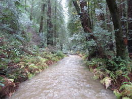 About a mile into Muir Woods , Matthew J G - December 2014