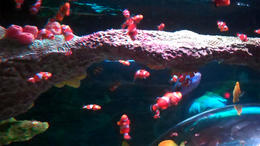 Clown fish! - February 2012
