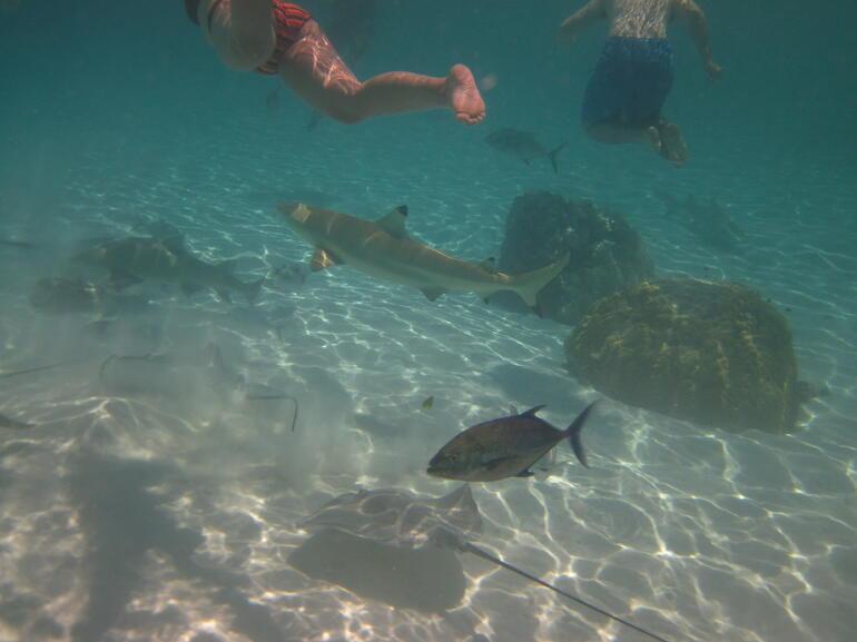 IMG_0204 - Bora Bora