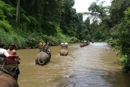 Elephants heading back home up the river after our jungle trek., Laurie R - September 2007