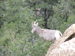 Wild life climbing the canyon! , Sue - December 2012