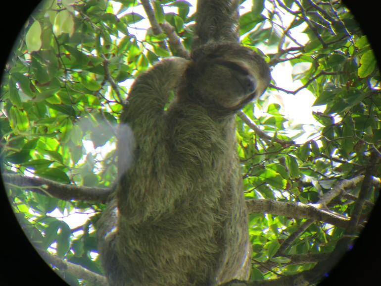 Sloth - San Jose