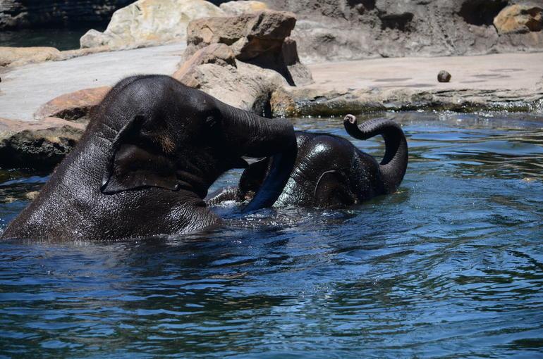 elephant-visite-zoo