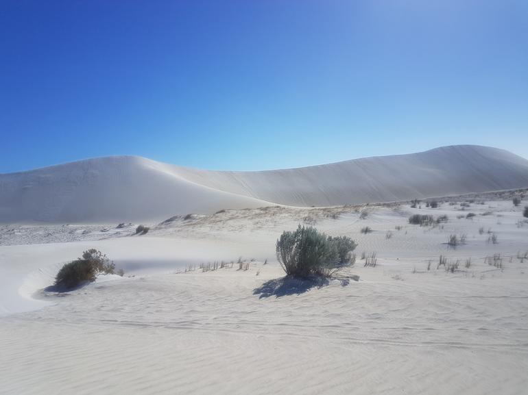 Pinnacles Desert, Koalas, and Sandboarding 4WD Day Tour from Perth photo 6