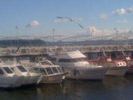 Boats lined up in the harbor., Bandit - August 2012