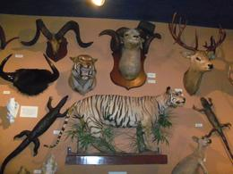 Lots of animals, exhibits, and history in this cool museum. Kids will love it as there are interactive parts where they learn about animals, carnival acts, and science. I loved it, because the ... , Jennifer W - April 2011