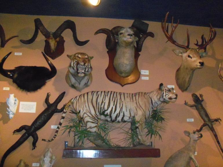 Buckhead Saloon... - San Antonio