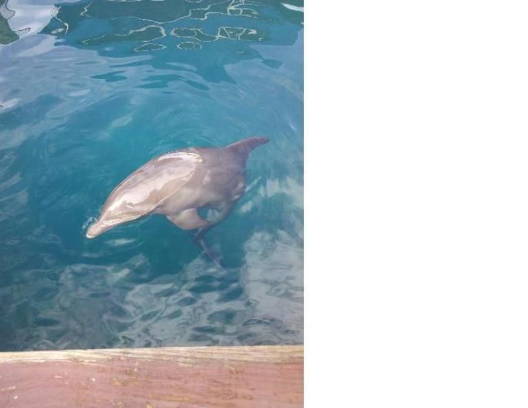 Dolphin 1 - Puerto Plata