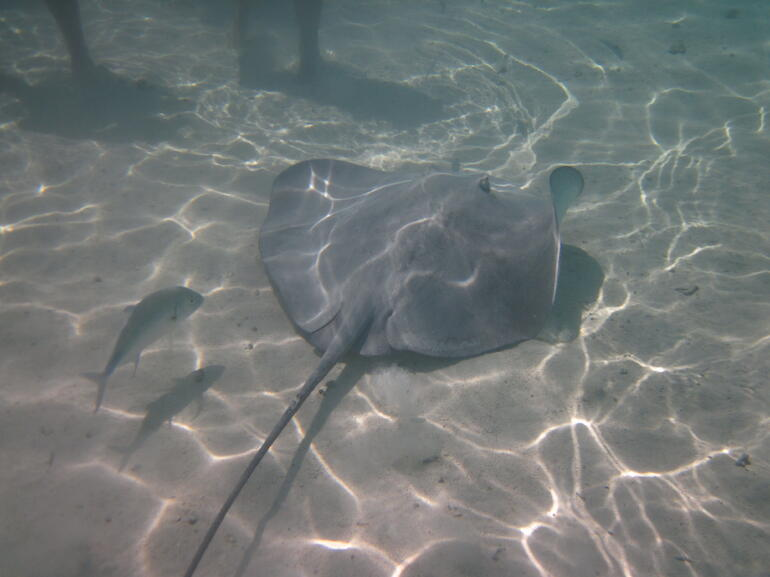 IMG_0218 - Bora Bora