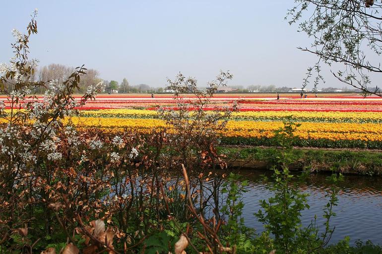 Keukenhof Gardens - Amsterdam