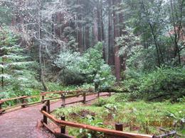It was a rainy day, but that couldn't cover the sheer beauty of the Redwood forest. - November 2009