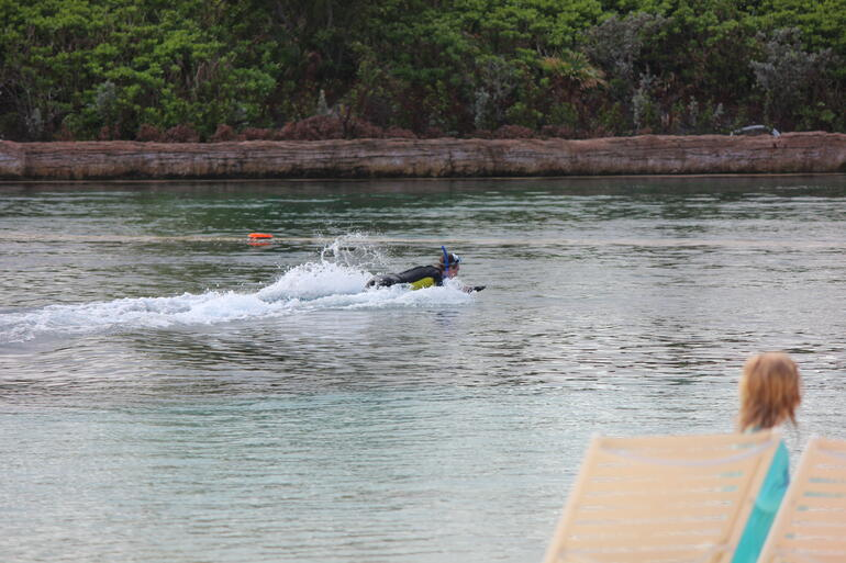 Dolphin Push - Nassau