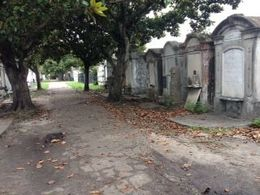 Garden District Walking Tour: Mansions and Lafayette Cemetery, Ona C - June 2016