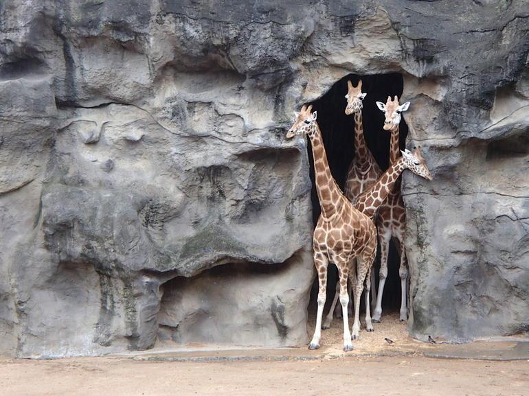 Taronga zoo - Sydney