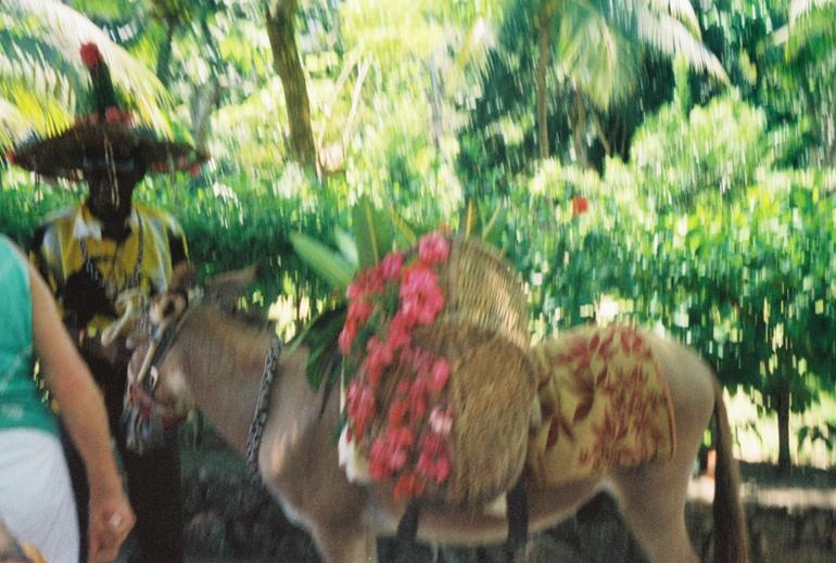 Welcome Donkey - Montego Bay