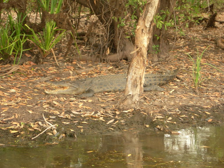 Yellow Water - Darwin
