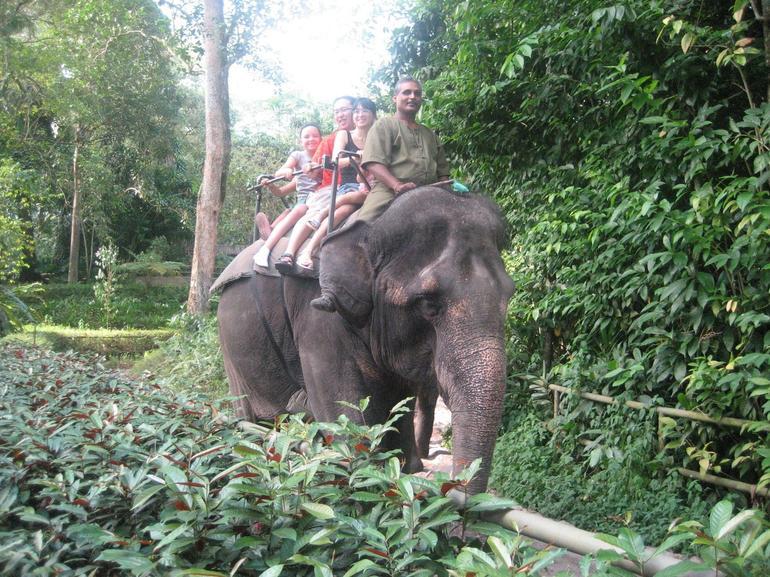 Elephant Ride - Singapore