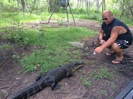 The swamps were so interesting with great commentary. The airboat trip was superb and the wildlife a real bonus. , Jeanette P - August 2016