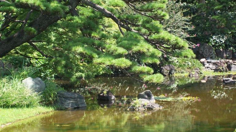 pond - Tokyo