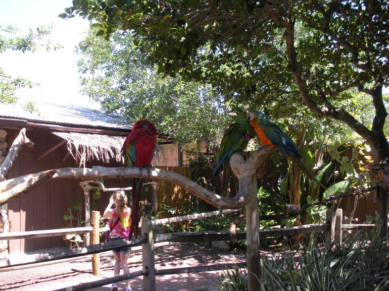 Pretty Birds - Orlando