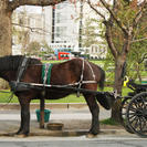 60-Minute The Royal Carriage Tour, Victoria, CANADA