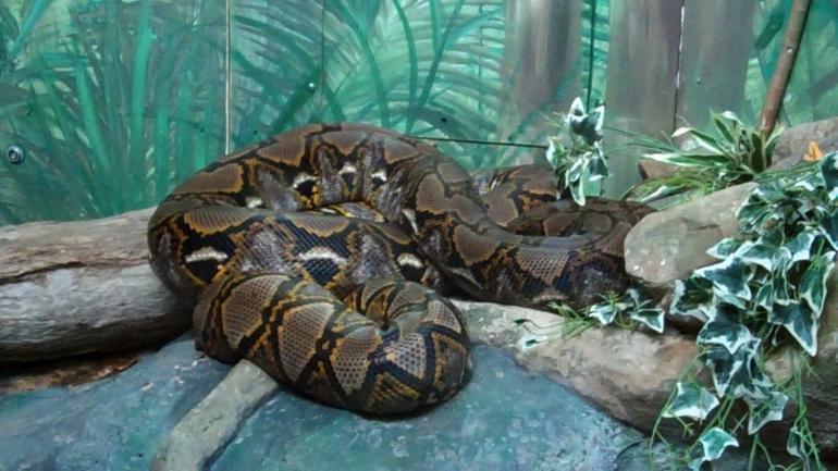 Snake, Taronga Zoo - Sydney